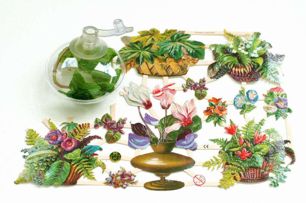 schablone—pflanzen